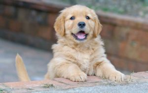 Becoming a new puppy owner