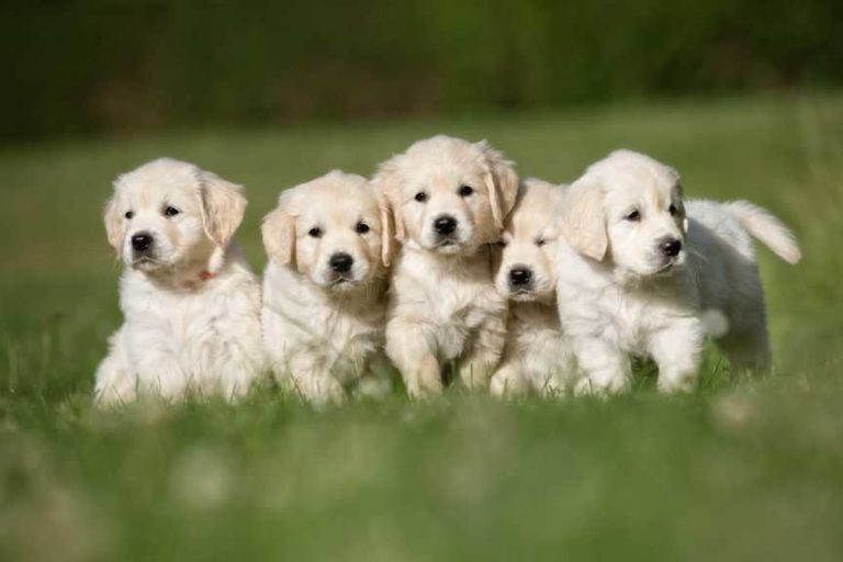Read more about the article How Old Should Puppies Be Before They Leave Their Mother?